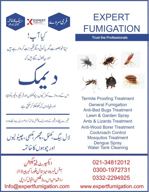 Termite Spray in Karachi